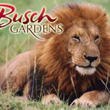 Busch Gardens Tampa Senior Discount