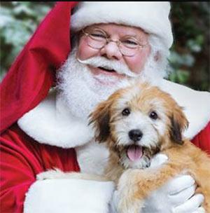 Free Pet Photo W Santa Free 4 Seniors